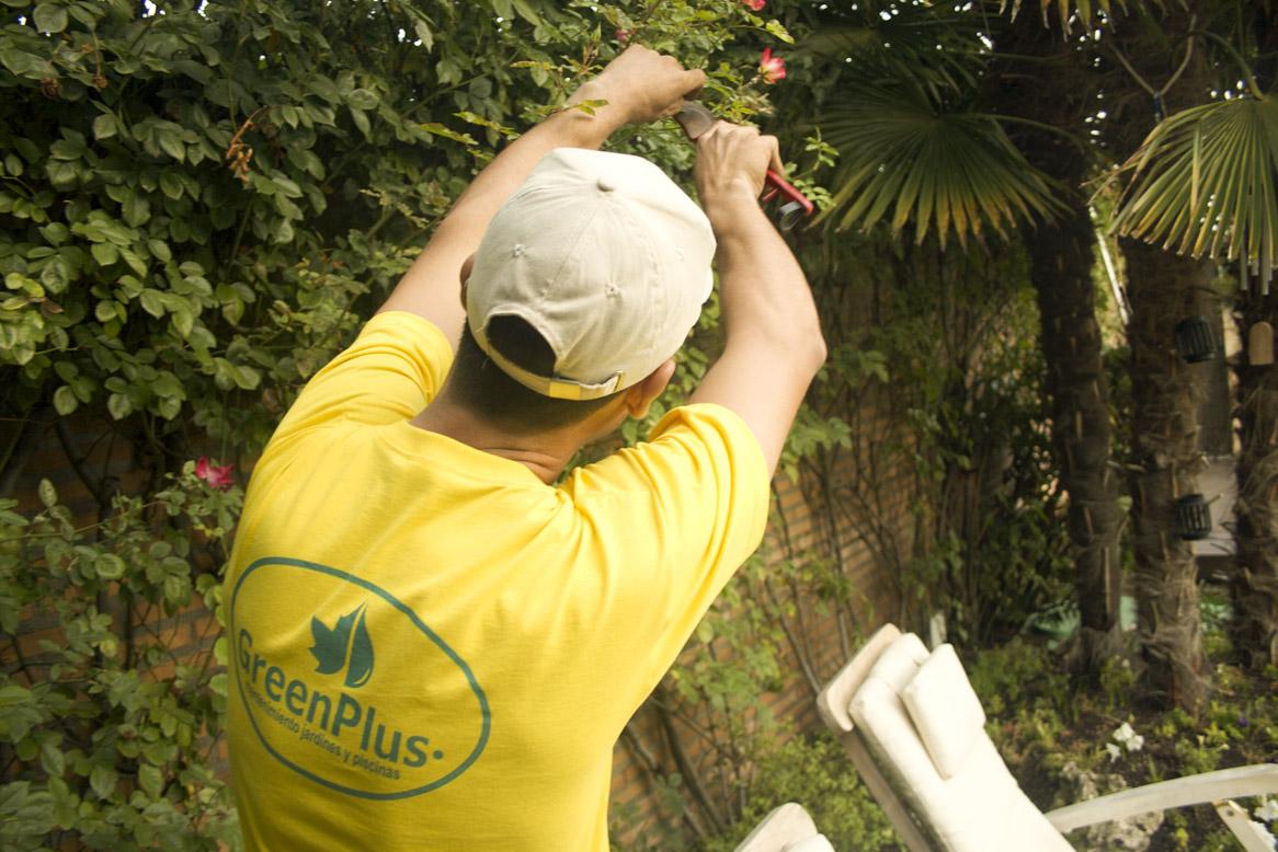 jardineros profesionales en Madrid