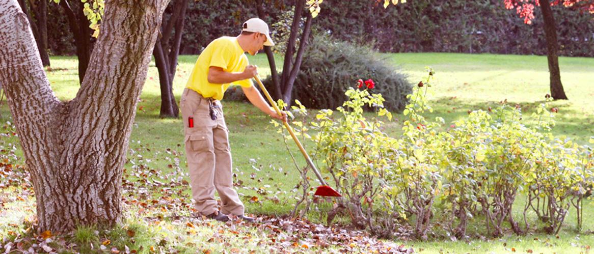 Empresa de jardiner a en madrid mantenimiento de piscinas for Empresas de jardineria